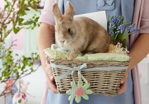 Germania a pasqua regalo coniglio