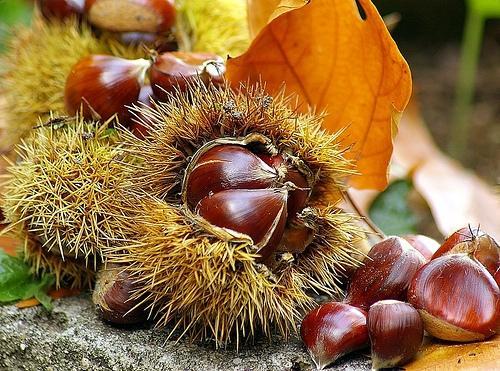 -autunno-castagna