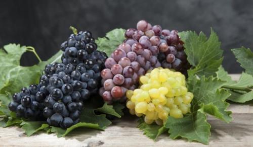 vari tipi di uva