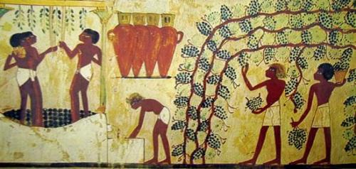 vendemmia-egizia